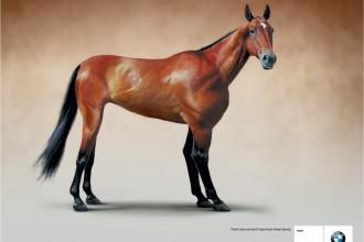 bmw-1-series-rabbit-frog-horse-print-354803-adeevee